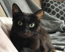 Päevakäpp: kassipoja mõõtu Biatat on seni saatnud vaid ebaõnn