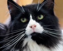 Bingo lugu | 936 päeva koduootust: kassipojana kolooniast päästetud karvapall pole kodusoojust tundnudki