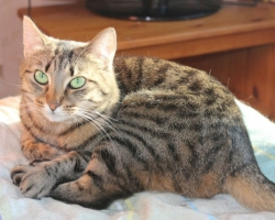 PÄEVAKÄPP ⟩ Armas Fiona on kodu oodanud juba üle 4 aasta