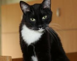 Fletchi lugu | koordinatsioonihäiretega kass vajab raviarve tasumisel abi