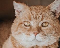 Tee oma unistus teoks: pesuehtne paksupõskne Garfield otsib omale kodu