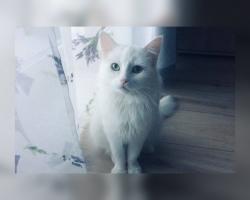 Eriline nimi, eriline kass: uut kodu otsib jalustrabava välimusega seltskonnadaam