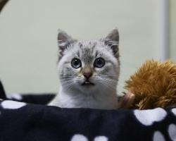 Kriitiline olukord Pesaleidjas: mitusada kassi vajab uusi vaktsiine