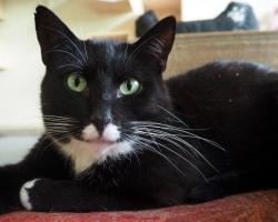 Kass Marko otsib kodu | Kas sina saaksid mind enda perre võtta?