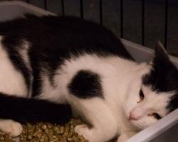 Kass Marõlja lugu | Oma senise elu tänaval veetnud võitlejahing Marõlja otsib kodu