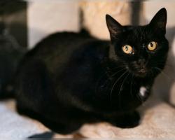 Mazikeeni lugu | Vaesel kassipreilil tuli endale ise uus kodu otsida, kui pererahvas ta auto pealt maha tõstis