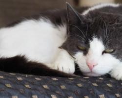 Tule appi! Kass Nirvana peab ülerahvastatud keskkonnast esimesel võimalusel pääsema