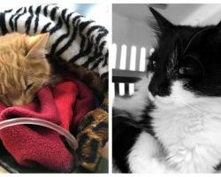 Šokk loomade varjupaigas: äkitselt rünnanud viirus jättis kassid hinge vaakuma