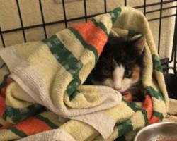 Eesti kassipoegi on taas kimbutamas surmav parvoviirus