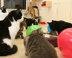 Täna, 22.oktoobril, sai Pesaleidja kassituba 2-aastaseks!