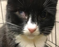 Aita abivajajat: Pipy otsib toetust, et minna silmaeemaldusoperatsioonile