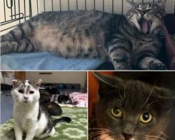Tule appi! Puurides kinni istuvad kassid vajavad kohe hoiukodusid