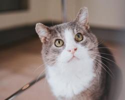 Päevakäpp: intelligentne Rocky on kasside kuldstandard