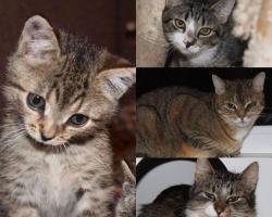 Aita abivajajaid: Pesaleidja suurim kasside hoiukodu on sattunud raskesse olukorda