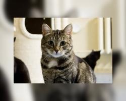 Teesi lugu | surmahirmust üle saanud kassi koduootus on kestnud juba jahmatavad kaks ja pool aastat ning kestab veelgi