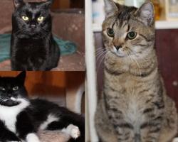 Täpp, Pallike Piia ja Max vajavad abi: kiisude elu ei ole olnud kerge, kuid ilma kassisõpradeta poleks neil lootustki