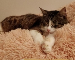 Aita abivajajat: kass Tripsut kimbutab neli erinevat tõbe