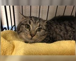 Unimüts Uni lugu | pisikene kassipoeg ei saa kassitoas üksinda hakkama