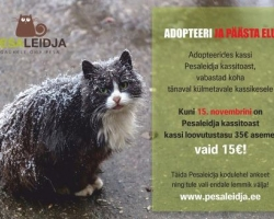 Adopteeri ja päästa elu! Kuni 15. novembrini on kõigi Pesaleidja kassitoa kasside loovutustasu 15 EUR!