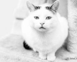 Pesaleidja hoolealune Ville suri: vabatahtlikud jäävad Villet meenutama kui üht väga erilist kassipoissi