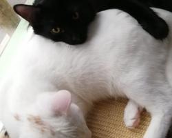 PÄEVAKÄPP ⟩ Yin ja Yang ootavad Kalamajas oma õiget kodu