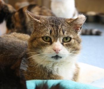 HEA TEADA ⟩ 5 põhjust, miks võtta kass just varjupaigast