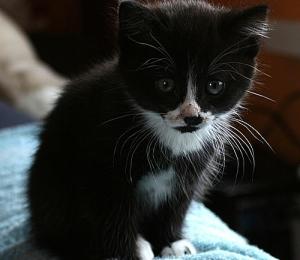 Veskimetsa kassipoeg