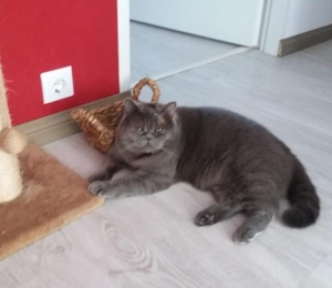 Sütiste tänavalt kadunud kass