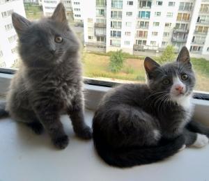 Mini ja Midi