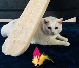 Kass Paksu