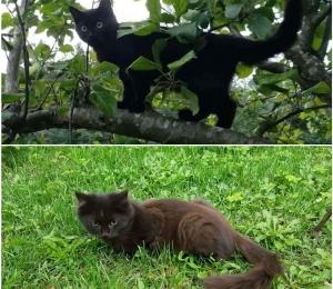 Nõmme kassipojad